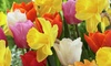 Pre-Order Tulip and Daffodil Pot Luck Bulb Mix (50-Piece): Pre-Order Tulip and Daffodil Pot Luck Bulb Mix (50-Piece)