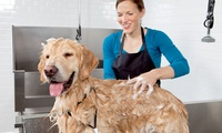 Dog Grooming Service at Happy Paws Torbay