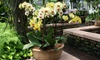 AW Pottery Atlanta - Dresden East: Pottery and Garden Accessories at AW Pottery Atlanta (Up to 58% Off)