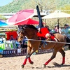 Up to 57% Off Entry at SportHorse Expo