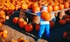 The Pumpkin Patch - Caledonia: $20 for $40 Worth of Tickets to Attractions at The Pumpkin Patch in Caledonia