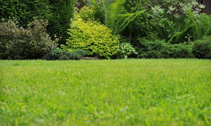 Lawns Plus Inc. - East: One or Three Fertilizer and Weed-Killer Treatments or Two Pest-Control Treatments from Lawns Plus Inc. (Up to 52% Off)