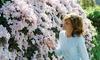 Fleurs Clematis Montana 'Mayleen'