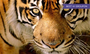 Austin Zoo: Zoo Visit for Two, Four, or Six to Austin Zoo (Up to 52% Off)