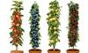 Set van 4 fruitboompilaren