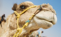 Desert Safari with BBQ and Optional Quad Biking For One, Two or Four with Sand Art Events & Tours (Up to 69% Off)
