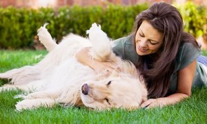 Hundesitter Bremen: Hundesitting über 3x 4 Stunden, übers Wochenende oder 10er-Karte beim Hundesitter Bremen ab 14,90 € (bis zu 50% sparen*)