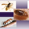 $35 for $85 Worth of pest control at PK Pest Management