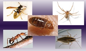 PK Pest Management: $35 for $85 Worth of pest control at PK Pest Management