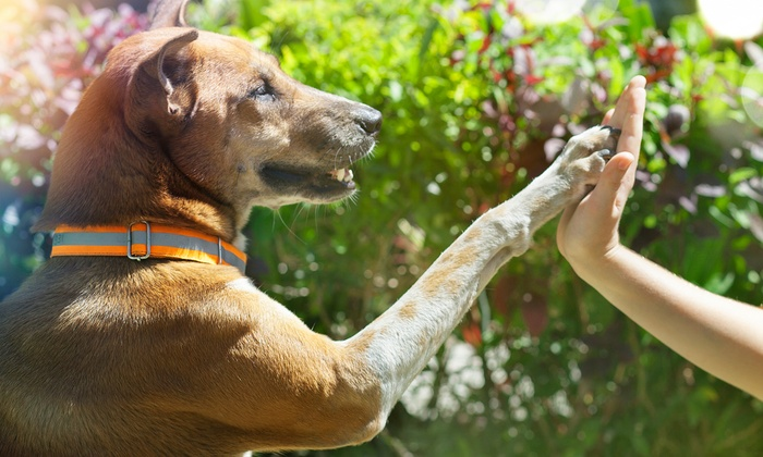 Holly and Hugo: Online Animal Physical Therapy Course, Pet First-Aid and CPR Course, or Both Courses from Holly and Hugo (Up to 97% Off)