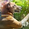 eKurs: Szkolenie i terapia psów