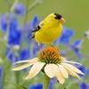 Flowering Seed Conservation Garden Mats