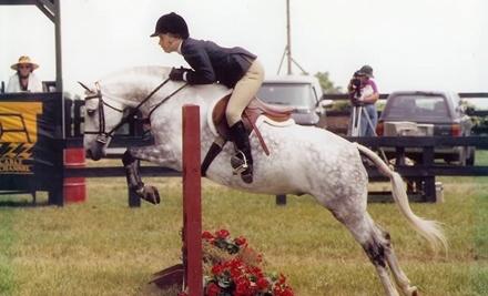 Pony Pastures - Pony Pastures in Tuscarora