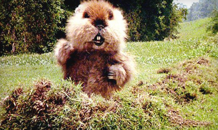 """""""Caddyshack"""" - Downtown: $14 for Movie Outing for Two to See """"Caddyshack"""" at Weinberg Center for the Arts in Frederick on December 28 (Up to $28 Value)"""