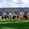 Horse Racing Club Membership