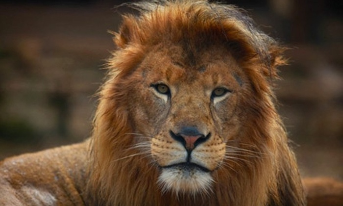 Capturing True Emotion - Multiple Locations: $59 for a Four-Hour Digital-Photography Class from Capturing True Emotion and Two-Hour Animal Photo Safari ($460 Value)