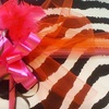 $10 for Apparel at Pink Feather Fashions
