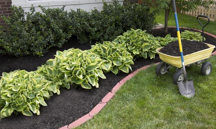 Hosta Plants From Gardening4less Groupon Goods