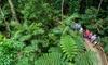 Daintree, Cape Trib and Bloomfield: 1-Day Safari Experience
