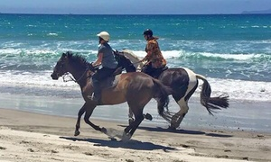 Waipu Horse Adventures: Beach Horse Trek for One (From $64) or Two People (From $125) at Waipu Horse Adventures (From $80 Value)