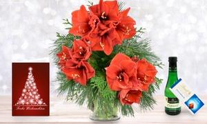 Blumenhaus Ehrend: Winterlicher Amaryllisstrauß in Rot oder Weiß mit Lindt Schokolade, Perlwein und Grußkarte von Bluvesa (32% sparen*)