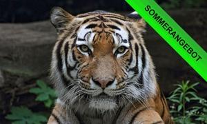 Zoo Duisburg: Nachmittags-Zoo-Ticket inkl. Delfinvorführung für Kind oder Erwachsenen in den Zoo Duisburg