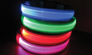 LED Safety Pet Collar: LED Safety Pet Collar