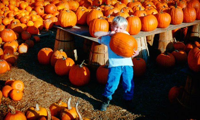 Abbey Farms of Marmion Abbey - Aurora: Pumpkin-Patch Outing for Four or Six at Abbey Farms of Marmion Abbey in Aurora