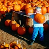 Up to 51% Off Pumpkin-Patch Outings in Aurora