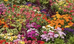 Butterfly/Hummingbird Attractant Roll-Out Garden (3-Pack)