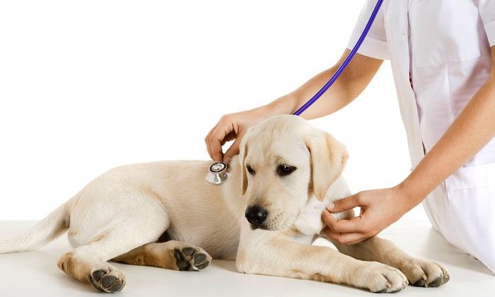 Redmond-Kirkland & Redmond-Fall City Animal Hospitals - Multiple Locations: $29 for a Veterinary Exam for Dog or Cat atRedmond-Kirkland & Redmond-Fall City Animal Hospitals ($64 Value)