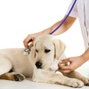 55% Off Veterinary Exam for Dog or Cat
