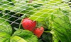 Fruit Tree Anti-Bird Netting