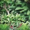 Bloom Nursery - Bloom Nursery: $20 Worth of Plants and Garden Supplies
