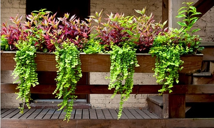 On The Ledge Landscaping - Beverly: $149 for a Window Box and Flowers from On the Ledge Landscaping ($300 Value)