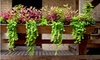 On The Ledge Landscaping: $149 for a Window Box and Flowers from On the Ledge Landscaping ($300 Value)