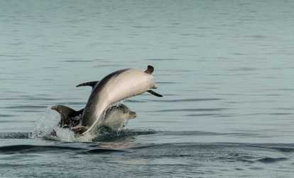 Image Placeholder For Dolphin Tour One Two Or Four At HHI Up
