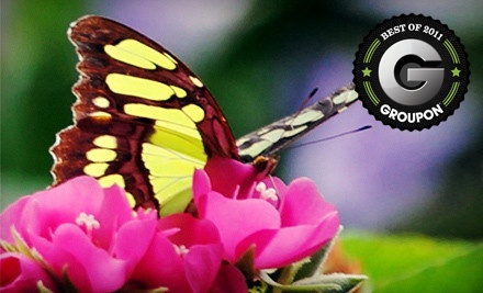 One Children's Admission, Valid for Guests 4-11 Years Old - 16th Annual Butterfly & Garden Festival at Flamingo Gardens in Davie