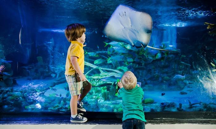 Sea Life Charlotte Concord Aquarium In Concord Nc Groupon