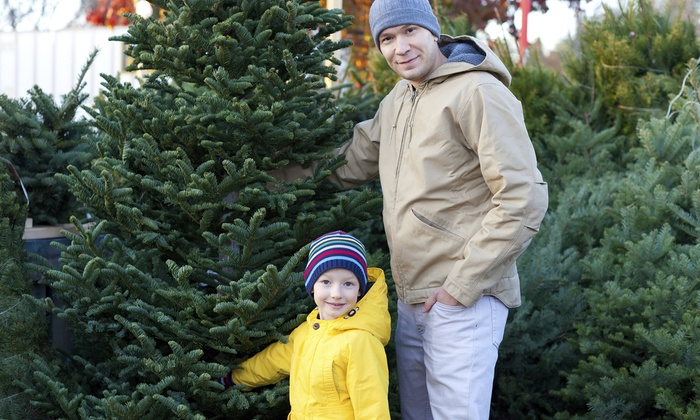 Mr. Jingles Christmas Trees - Gainesville: Christmas Trees at Mr. Jingles Christmas Trees (50% Off). Two Options Available.
