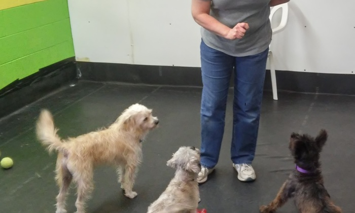 Tail Waggin' Doggy Daycare - Lake Country Industrial Park: Two Days of Overnight Pet Boarding at Tail Waggin' Doggy Daycare (50% Off)