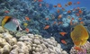 Lower Keys Adventure Charters: A Taste of Big Pine! Snorkel Package for One or Two from Lower Keys Adventure Charters (Up to 57% Off)
