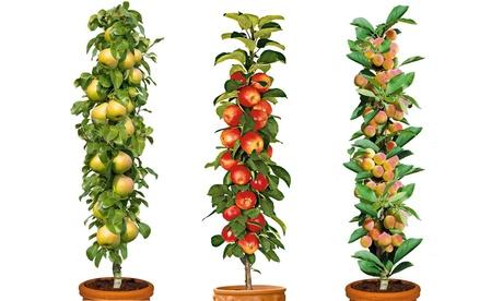 Colección de 3 o 6 árboles frutales con frutos dulces comestibles