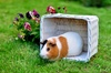 72% Off a Pet-Urine-Removal Treatment
