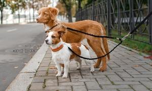 Waloo Pets Double Dog Bungee Leash