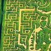 Half Off Corn-Maze Passes for 2 in Milford Center
