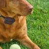 PetZoom Wireless Dog Fence System