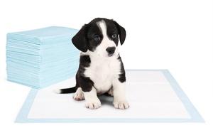 Tapis d'apprentissage pour chiens