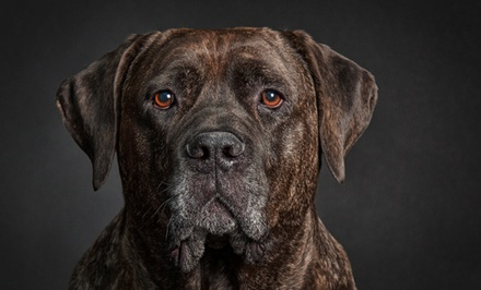 $59 for a One-Hour In-Studio Pet-Portrait Session at Tellier Photography Designs ($200 Value)