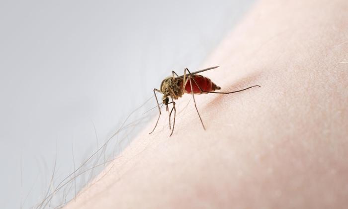 A Bug Genie Pest Control - Austin: $52 for $95 Worth of Services — A Bug Genie Pest Control